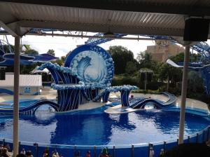 Dolphin show!