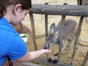 Feeding a kangaroo!!