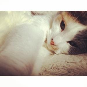 Meet Lucy :)