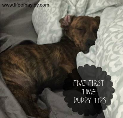first time puppy tips
