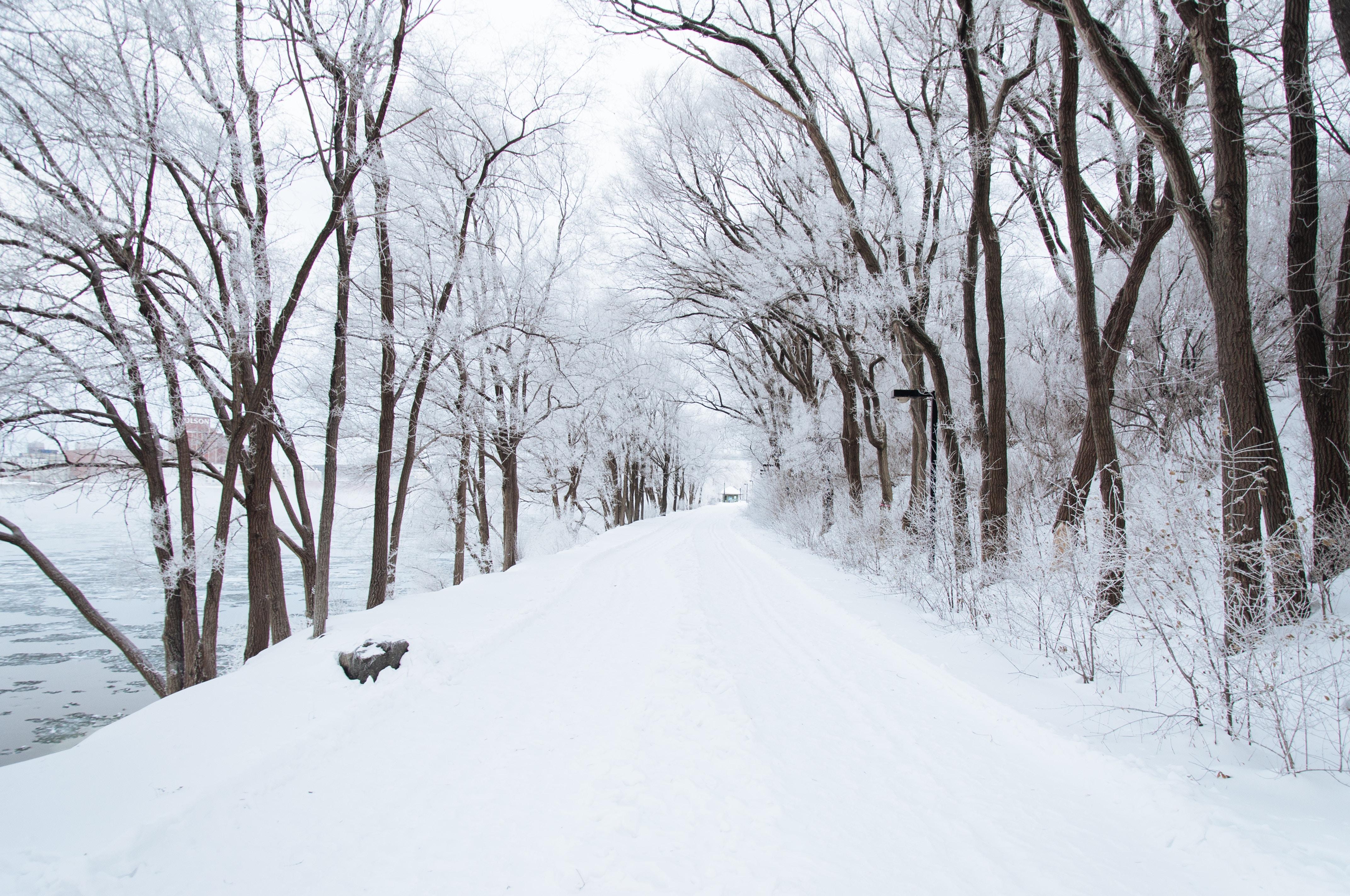 Michigan winter 2019